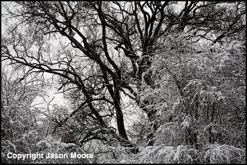 Coate Water Swindon Snow